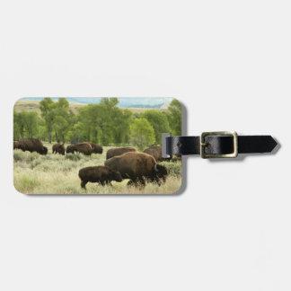Photographie d'animal de nature de bison du étiquette à bagage