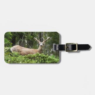 Photographie d'animal de nature de cerfs communs étiquette à bagage