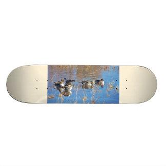 Photographie d'animaux de faune d'oiseaux de skateboard 21,6 cm