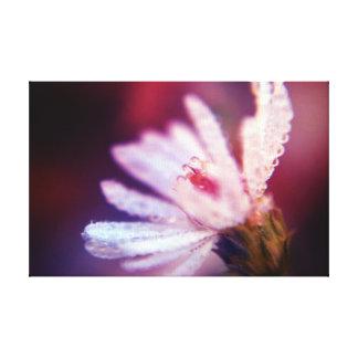 Photographie de beaux-arts - gouttes de rosée de toiles
