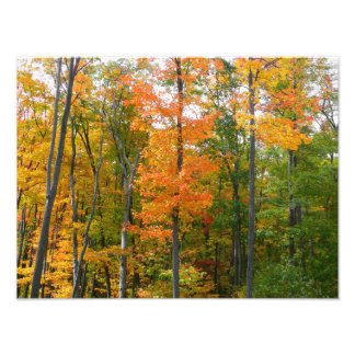 Photographie de nature d'automne d'arbres d'érable