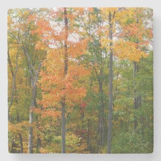 Photographie de nature d'automne d'arbres d'érable dessous-de-verre en pierre