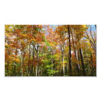 Photographie de paysage d'automne de la forêt II