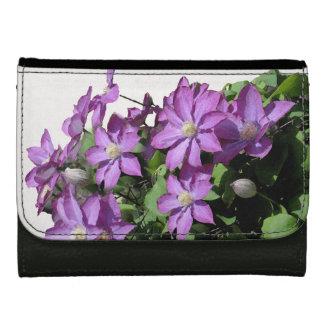 Photographie florale de fleur de jardin de fleurs