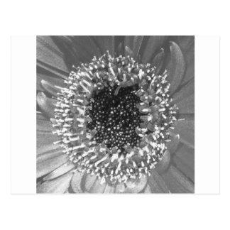 Photographie florale noire et blanche carte postale
