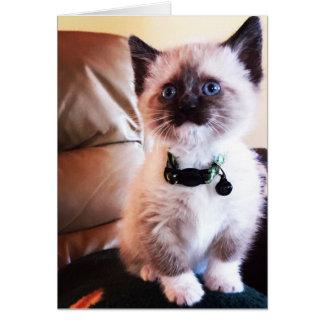 Photographie masquée de chaton observée par bleu carte de vœux