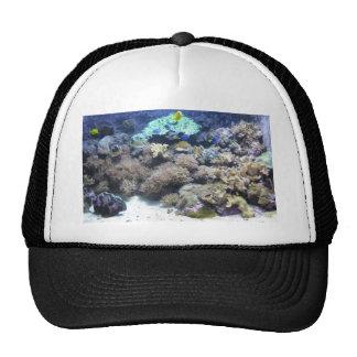Photographie sous-marine - poisson tropical coloré casquettes de camionneur