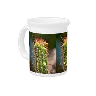 Pichet Broc épineux de cactus