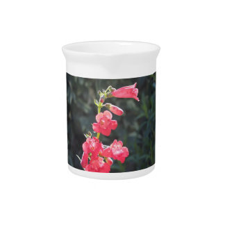 Pichet Cruche rose ensoleillée de fleur de Penstemon