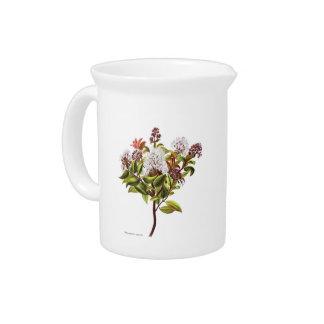 Pichet Fleurs vintages de NZ - albiflora de Meterosideros