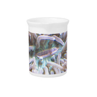 Pichet Un long corail de plat de tentacule