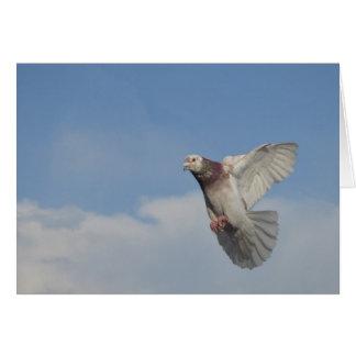 Pigeon voyageur en vol carte de vœux
