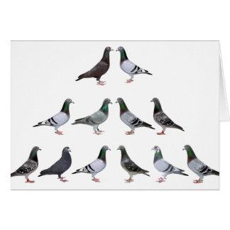 Pigeons voyageur champions carte de vœux