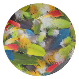 Pile des plumes colorées assiettes en mélamine
