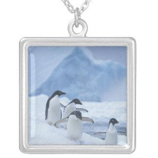 Pingouins d'Adelie (adeliae de Pygoscelis) sur la Collier