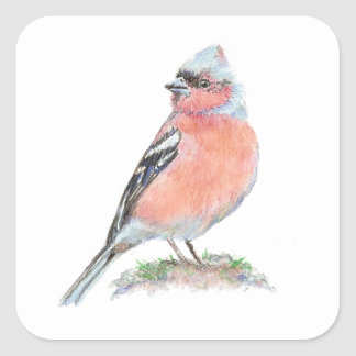 Pinson mignon, collection d'oiseau d'aquarelle sticker carré