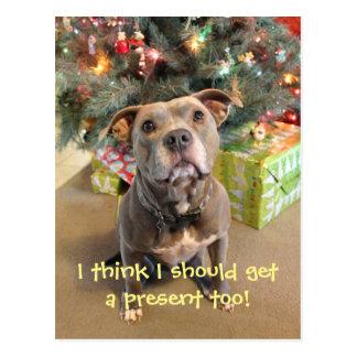 Pitbull I veulent une carte postale actuelle de