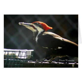 Pivert de Pileated Carte