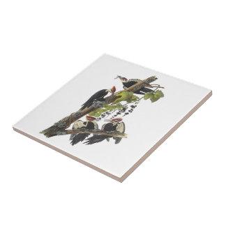 Pivert de Pileated par Audubon Carreau