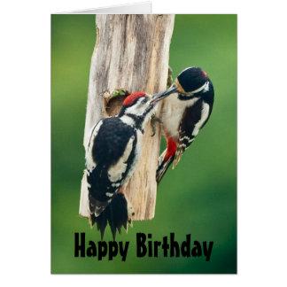 Pivert repéré de carte de joyeux anniversaire