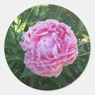Pivoine rose sticker rond