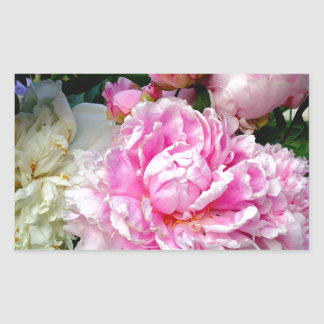 Pivoines roses et blanches sticker rectangulaire