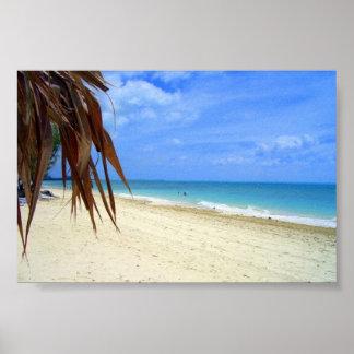 Plage et palmier des Bahamas