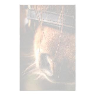 Plan rapproché d'un nez mignon de cheval de Brown Papeterie