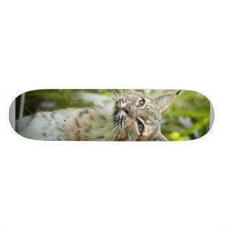 Planche à roulettes BobcatBCR011