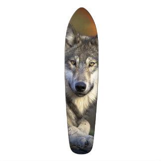 Planche à roulettes de sagesse de loup mini skateboard 18,4 cm
