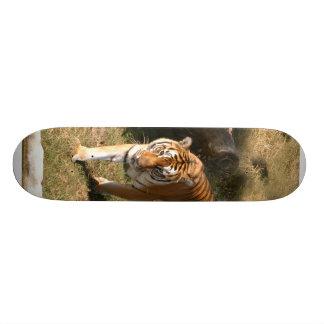 Planche à roulettes de tigre de Bengale
