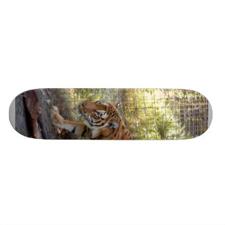 Planche à roulettes du Bengali 006 de tigre