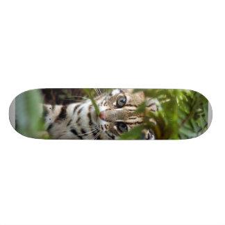 Planche à roulettes du chat 022 du Bengale