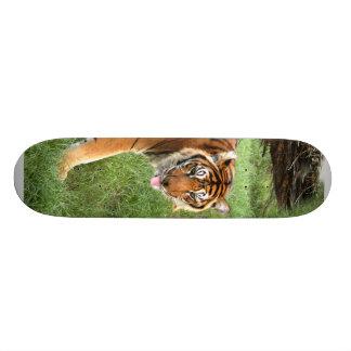 Planche à roulettes du tigre de Bengale 008