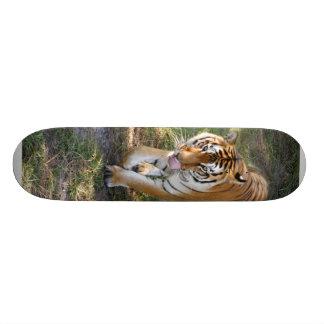Planche à roulettes du tigre de Bengale 012