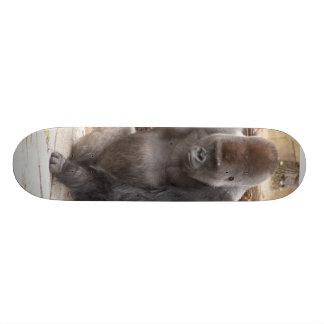 Planche à roulettes Gorilla_014