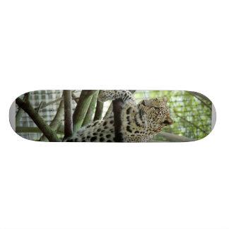 Planche à roulettes LeopardSundari_006