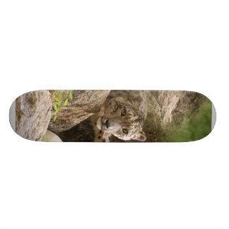 Planche à roulettes SnowLeopardBCR002