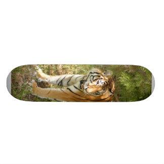Planche à roulettes Tiger_Aroara004