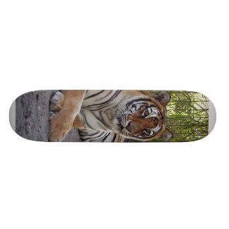 planche à roulettes tiger-sarmoti-002