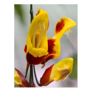 plante exotique carte postale