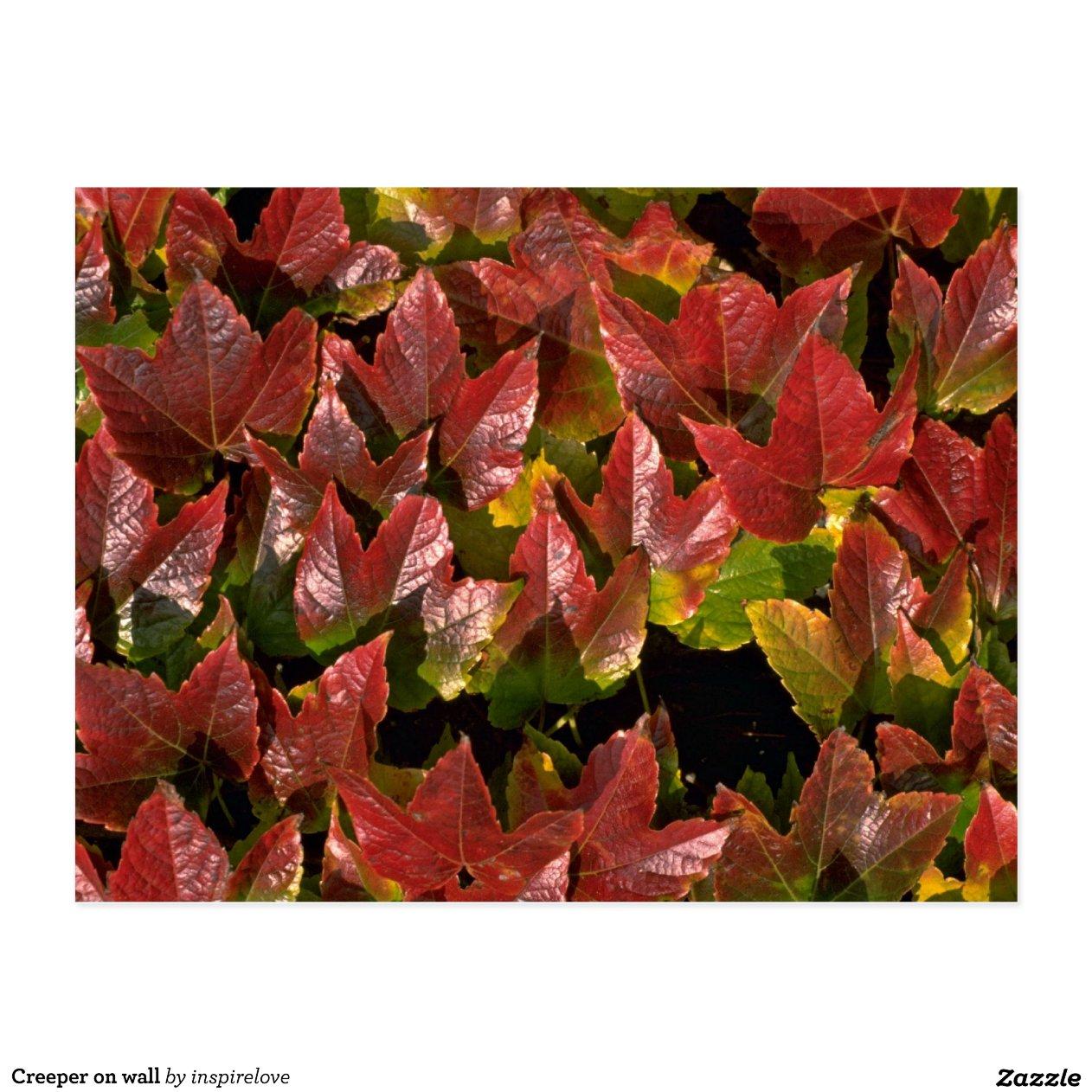 Plante grimpante sur le mur cartes postales zazzle - Plante grimpante mur ...