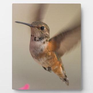 Plaque de colibri avec le chevalet