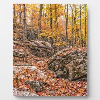 Plaque Photo Belle forêt d'automne