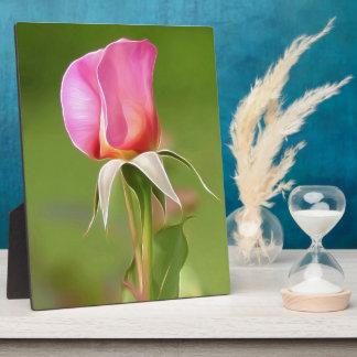 Plaque Photo Bourgeon solitaire de rose de rose