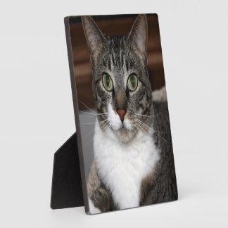 Plaque Photo Chat tigré vous regardant photo