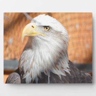 Plaque Photo Eagle dans Dieu que nous faisons confiance