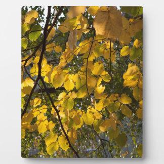 Plaque Photo Feuille d'automne jaune et vert