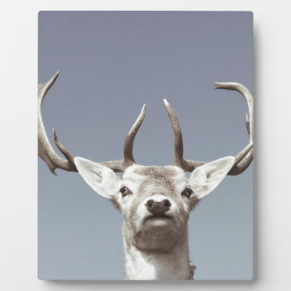Plaque Photo Le cerf imprime le Stag Deer Gewei Antlers