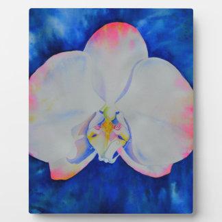 Plaque Photo Le rose rougissent orchidée